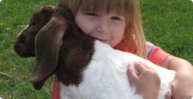 002_baby_goat