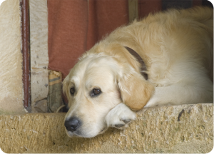petlossdog
