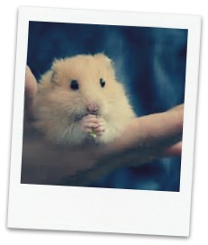 hamster-eating_blog
